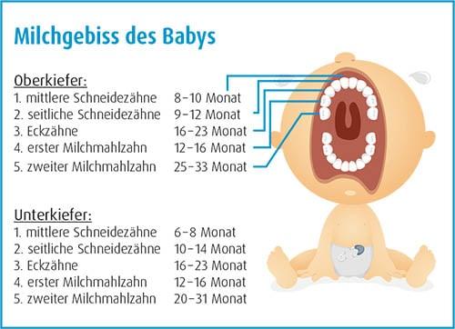 Das Milchgebiss des Babys